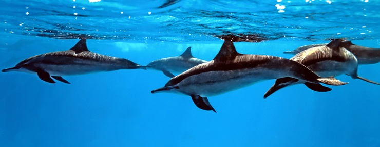 Dolphins - Dolphin Adventure Package
